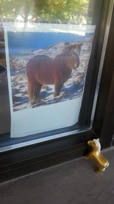 More Pony!